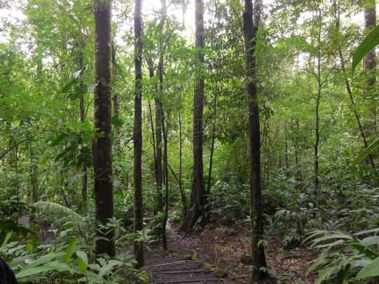 Mi experiencia en Sensoria, bosque tropical en Costa Rica