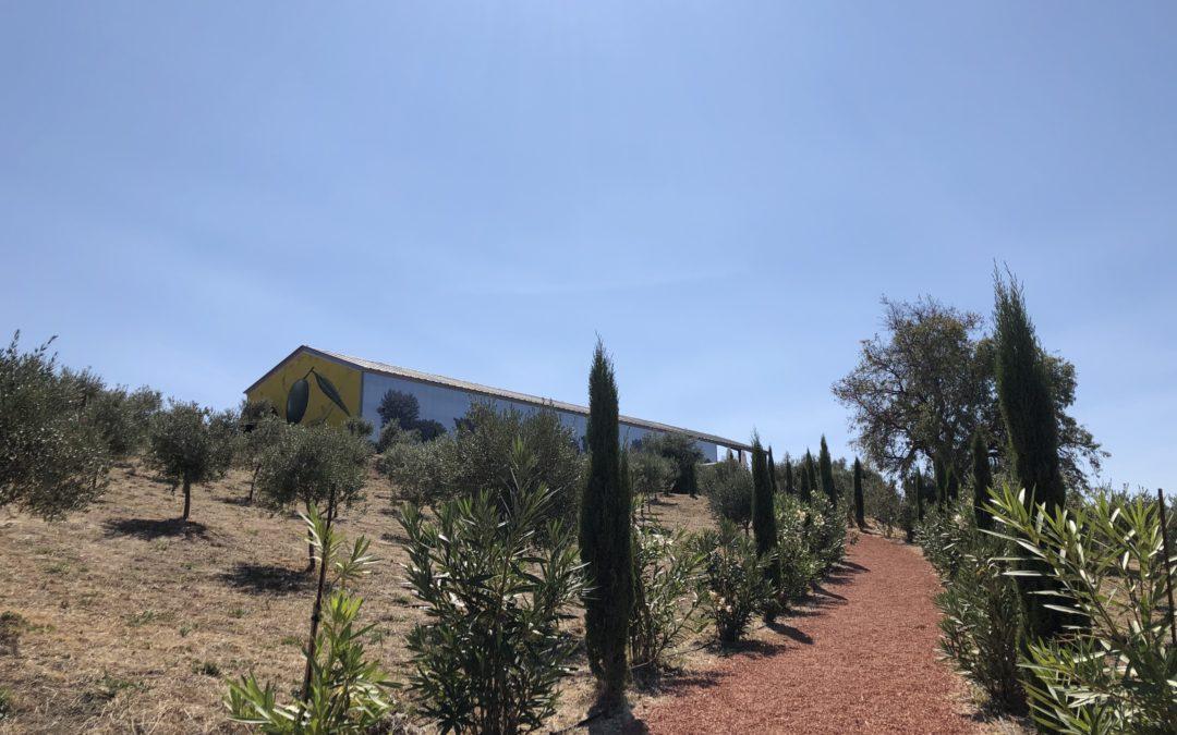 Oleoturismo y diseño en LA Organic Experience, Ronda, Costa del Sol